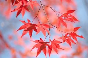 Kyoto-2014 Autumn